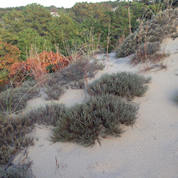 Hither Hills State Park (Walking Dunes)