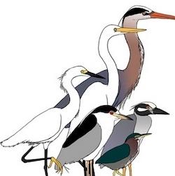 Four Harbors Audubon Society