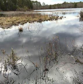 Cranberry Bog Preserve