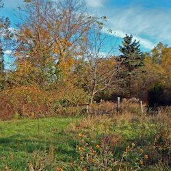 Carpenter Park Farm