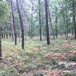 Rocky Point Pine Barrens State Forest